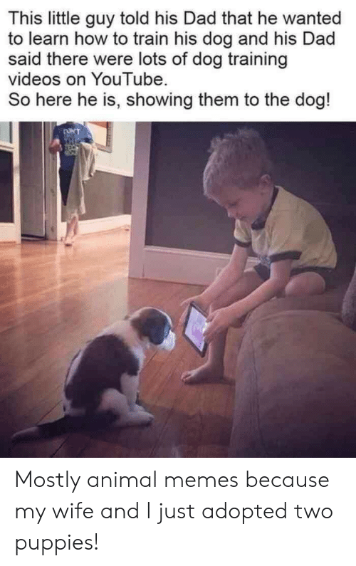 little guy: This little guy told his Dad that he wanted  to learn how to train his dog and his Dad  said there were lots of dog training  videos on YouTube  So here he is, showing them to the dog!  ONT  THE Mostly animal memes because my wife and I just adopted two puppies!