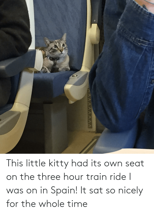 sat: This little kitty had its own seat on the three hour train ride I was on in Spain! It sat so nicely for the whole time