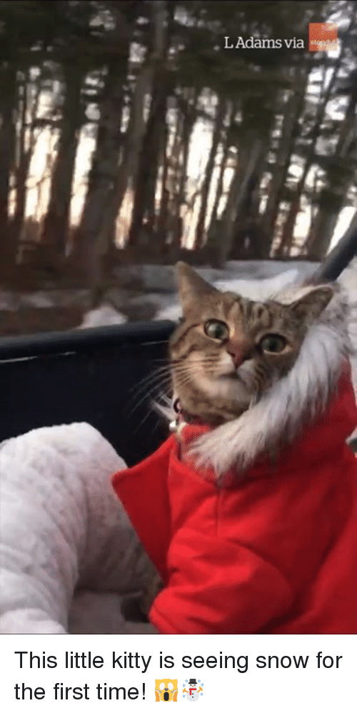 Snow, Time, and First: This little kitty is seeing snow for the first time! 🙀☃️
