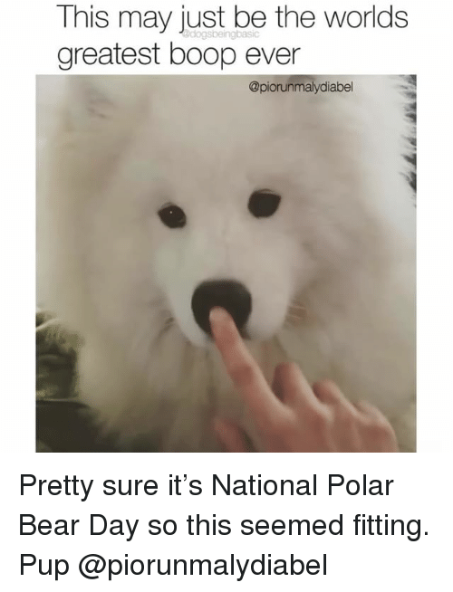 Memes, Bear, and Pup: This may just be the worlds  greatest boop ever  @piorunmalydiabel Pretty sure it's National Polar Bear Day so this seemed fitting. Pup @piorunmalydiabel
