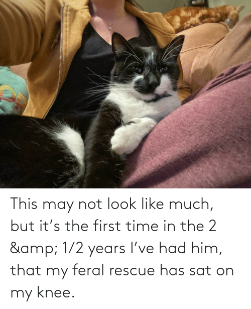 sat: This may not look like much, but it's the first time in the 2 & 1/2 years I've had him, that my feral rescue has sat on my knee.