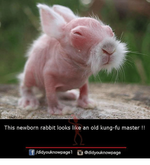 Kungs: This newborn rabbit looks like an old kung-fu master !!  /didyouknowpagel@didyouknowpage