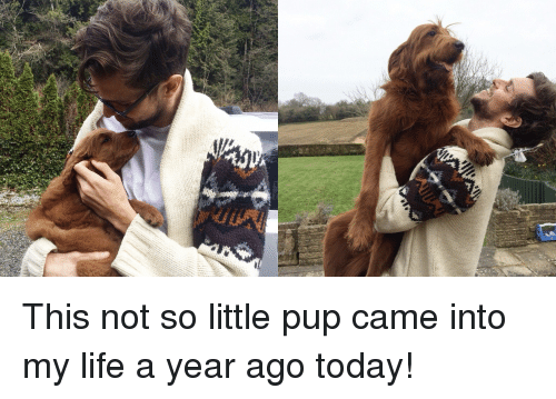 Life, Today, and Pup: This not so little pup came into my life a year ago today!