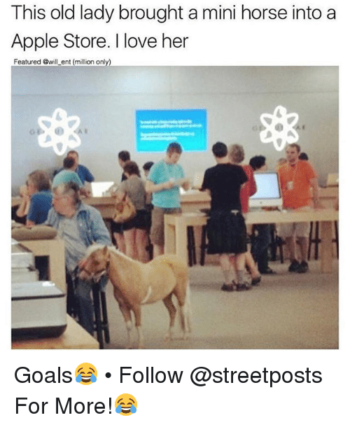 Apple Store: This old lady brought a mini horse into a  Apple Store. I love her  Featured @will ent (million only) Goals😂 • Follow @streetposts For More!😂