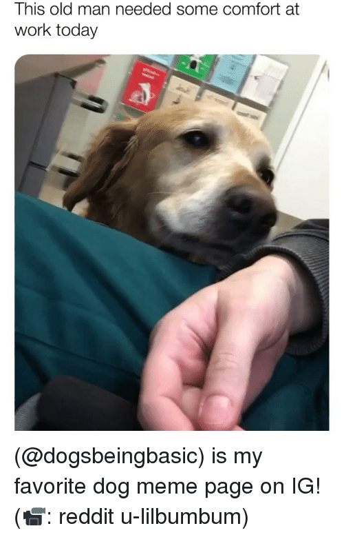 Meme, Memes, and Old Man: This old man needed some comfort at  work today (@dogsbeingbasic) is my favorite dog meme page on IG! (📹: reddit u-lilbumbum)