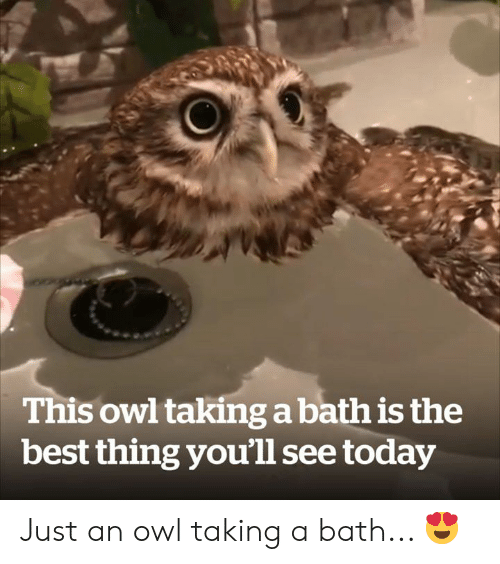 youll see: This owl taking a bath is the  best thing you'll see today Just an owl taking a bath... 😍