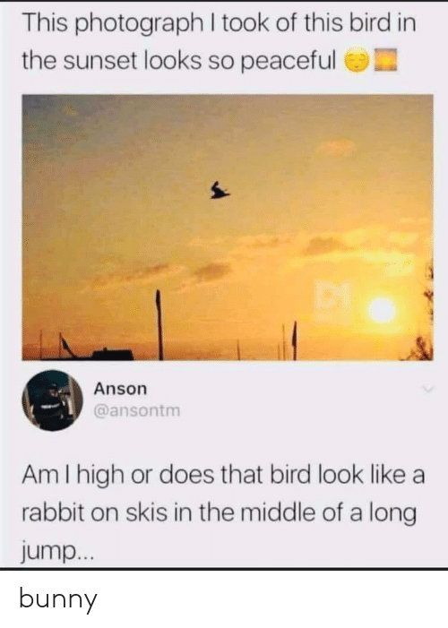 Rabbit, Sunset, and The Middle: This photograph I took of this bird in  the sunset looks so peaceful  Anson  @ansontm  Am I high or does that bird look like a  rabbit on skis in the middle of a long  jump... bunny
