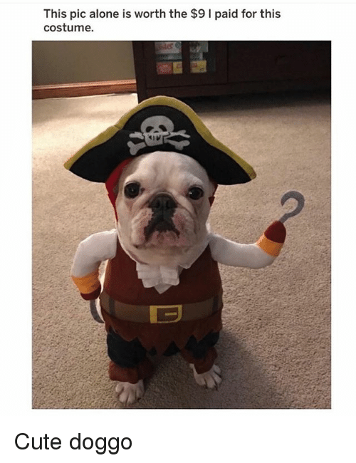 Being Alone, Cute, and Memes: This pic alone is worth the $9 I paid for this  costume. Cute doggo