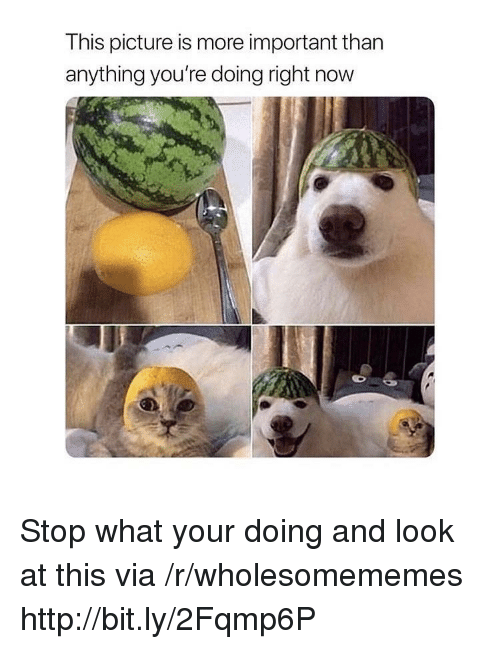 Http, Via, and Picture: This picture is more important than  anything you're doing right now Stop what your doing and look at this via /r/wholesomememes http://bit.ly/2Fqmp6P