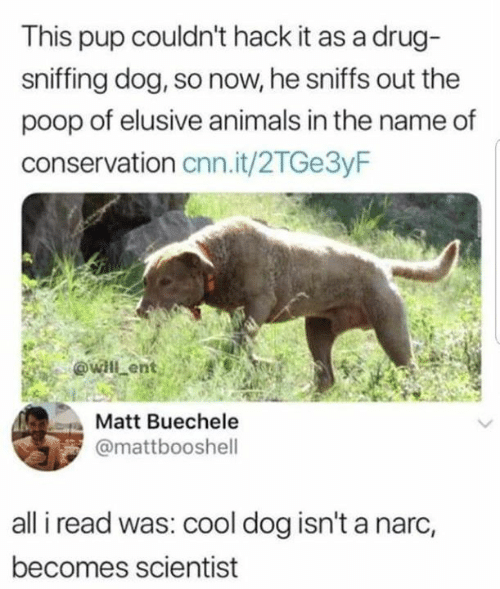 Sniffing: This pup couldn't hack it as a drug-  sniffing dog, so now, he sniffs out the  poop of elusive animals in the name of  conservation cnn.it/2TGe3yF  Matt Buechele  @mattbooshell  all i read was: cool dog isn't a narc,  becomes scientist