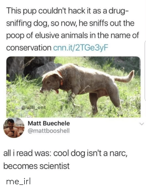 Sniffing: This pup couldn't hack it as a drug-  sniffing dog, so now, he sniffs out the  poop of elusive animals in the name of  conservation cnn.it/2TGe3yF  Matt Buechele  @mattbooshell  all i read was: cool dog isn't a narc,  becomes scientist me_irl