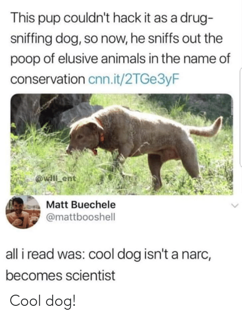 Sniffing: This pup couldn't hack it as a drug-  sniffing dog, so now, he sniffs out the  poop of elusive animals in the name of  conservation cnn.it/2TGe3yF  Matt Buechele  @mattbooshell  all i read was: cool dog isn't a narc,  becomes scientist Cool dog!