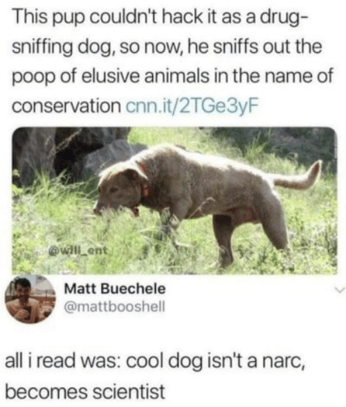 Sniffing: This pup couldn't hack it as a drug  sniffing dog, so now, he sniffs out the  poop of elusive animals in the name of  conservation cnn.it/2TGe3yF  ovall ent  Matt Buechele  @mattbooshell  all i read was: cool dog isn't a narc,  becomes scientist