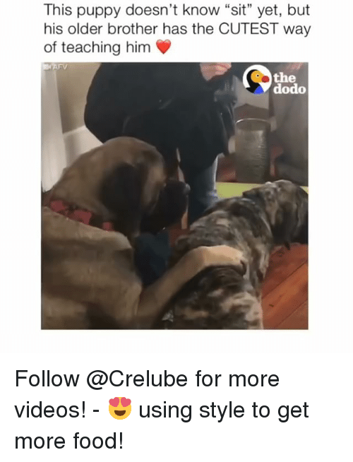 "Food, Memes, and Videos: This puppy doesn't know ""sit"" yet, but  his older brother has the CUTEST way  of teaching him  the  dodo Follow @Crelube for more videos! - 😍 using style to get more food!"