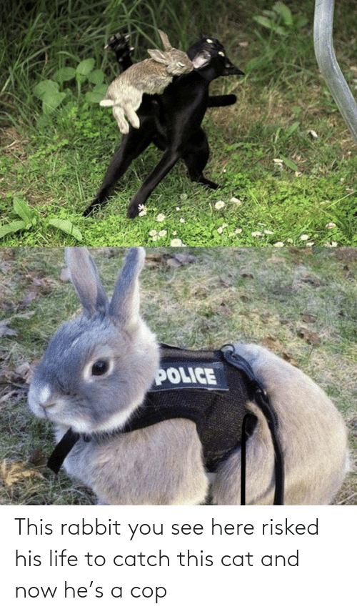 Life: This rabbit you see here risked his life to catch this cat and now he's a cop