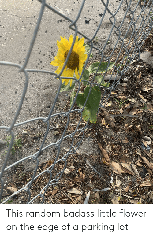 On The Edge: This random badass little flower on the edge of a parking lot