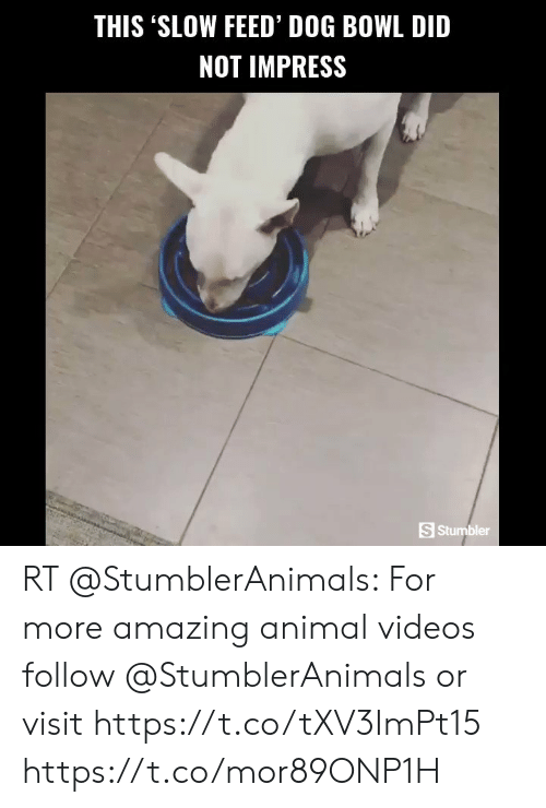 Animal Videos: THIS 'SLOW FEED' DOG BOWL DID  NOT IMPRESS  S Stumbler RT @StumblerAnimals: For more amazing animal videos follow @StumblerAnimals or visit https://t.co/tXV3ImPt15 https://t.co/mor89ONP1H