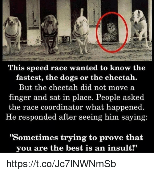 """Dogs, Memes, and Best: This speed race wanted to know the  fastest, the dogs or the cheetah.  But the cheetah did not move a  finger and sat in place. People asked  the race coordinator what happened.  He responded after seeing him saying:  """"Sometimes trying to prove that  you are the best is an insult!"""" https://t.co/Jc7lNWNmSb"""