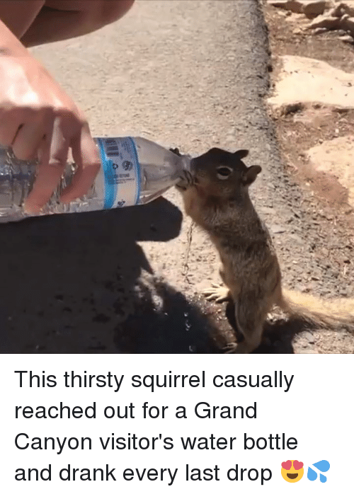 Memes, Thirsty, and Squirrel: This thirsty squirrel casually reached out for a Grand Canyon visitor's water bottle and drank every last drop 😍💦