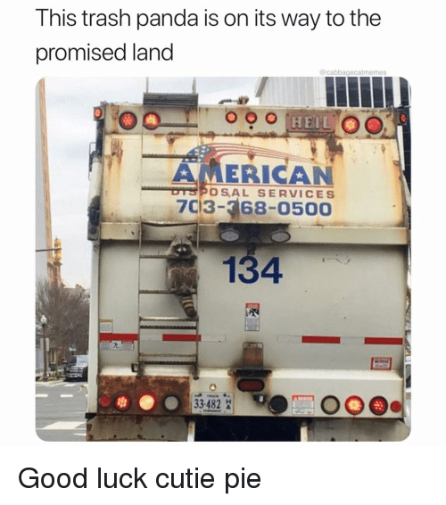 Trash, Panda, and American: This trash panda is on its way to the  promised land  @cabbagecatmemes  AMERICAN  DTSPOSAL SERVICES  7C13- 68-0500  134  33482 Good luck cutie pie