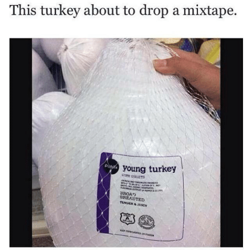 Turkey, Mixtape, and This: This turkey about to drop a mixtape.  young turkey  WITH GEETS  BROAD  BREASTED