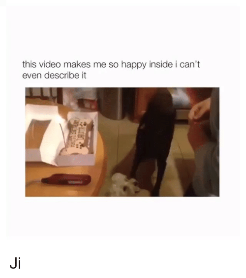 Memes, Happy, and Video: this video makes me so happy inside i can't  even describe it Ji