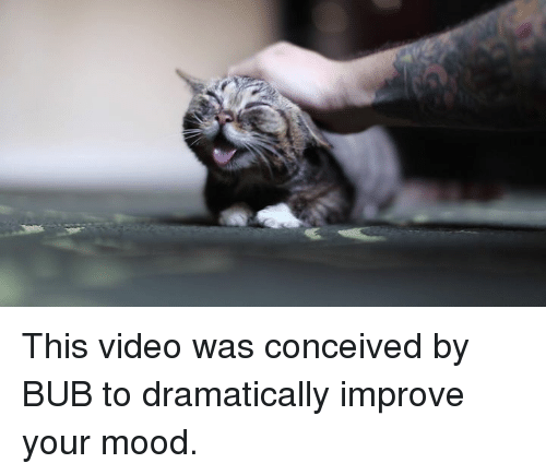 Conceivment: This video was conceived by BUB to dramatically improve your mood.