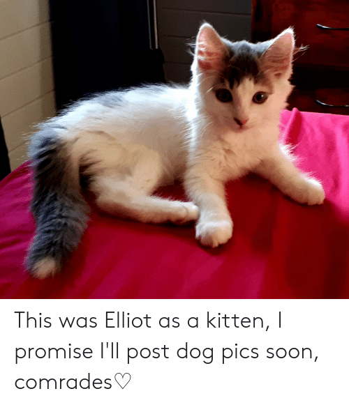 Soon..., Dog, and Kitten: This was Elliot as a kitten, I promise I'll post dog pics soon, comrades♡