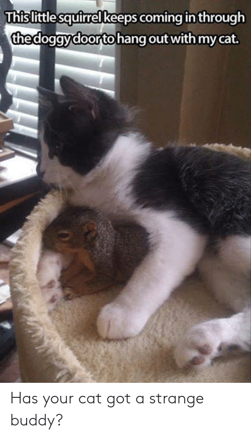 Memes, Squirrel, and 🤖: Thislittle squirrel keeps coming in through  thedogavdoorto hang out with my cat Has your cat got a strange buddy?