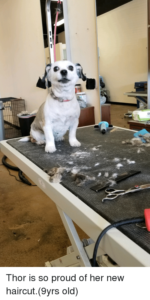 Haircut, Thor, and Old: Thor is so proud of her new haircut.(9yrs old)