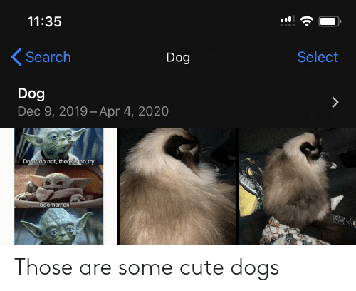 cute dogs: Those are some cute dogs