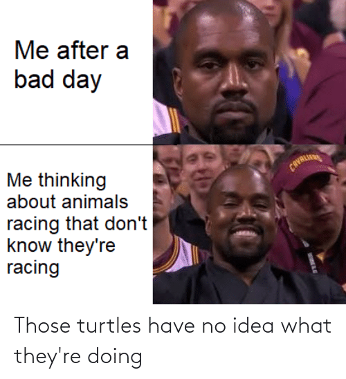 turtles: Those turtles have no idea what they're doing