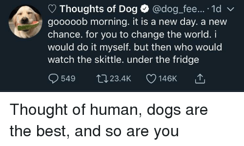 skittle: Thoughts of Dog @dog fee.... 1d  gooooob morning. it is a new day. a new  chance. for you to change the world. i  would do it myself. but then who would  watch the skittle. under the fridge  549 t023.4K 146K Thought of human, dogs are the best, and so are you