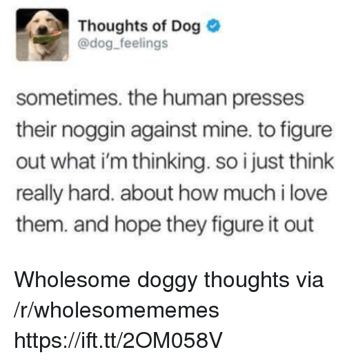 Love, Wholesome, and Figure It Out: Thoughts of Dog  @dog feelings  edog-feelngs  sometimes. the human presses  their noggin against mine. to figure  out what i'm thinking. so i just think  really hard. about how much i love  them. and hope they figure it out Wholesome doggy thoughts via /r/wholesomememes https://ift.tt/2OM058V
