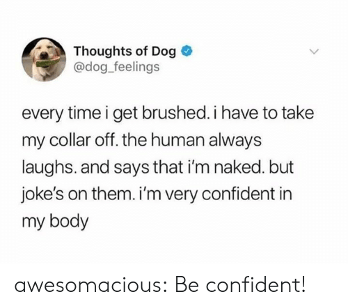Tumblr, Blog, and Http: Thoughts of Dog  @dog feelings  every time i get brushed. i have to take  my collar off. the human always  laughs. and says that i'm naked. but  joke's on them. i'm very confident in  my body awesomacious:  Be confident!