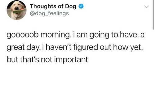 How, Dog, and Day: Thoughts of Dog  @dog feelings  gooooob morning. i am going to have. a  great day.i haven't figured out how yet.  but that's not important