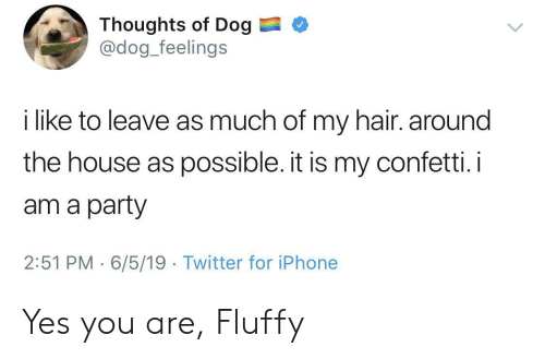 fluffy: Thoughts of Dog  @dog_feelings  i like to leave as much of my hair. around  the house as possible. it is my confetti.i  am a party  2:51 PM 6/5/19 Twitter for iPhone Yes you are, Fluffy