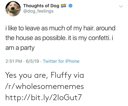 fluffy: Thoughts of Dog  @dog_feelings  i like to leave as much of my hair. around  the house as possible. it is my confetti. i  am a party  2:51 PM 6/5/19 Twitter for iPhone Yes you are, Fluffy via /r/wholesomememes http://bit.ly/2IoGut7