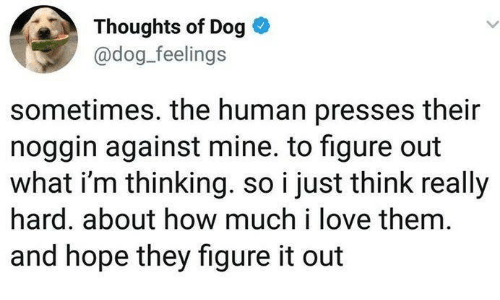 Love, Figure It Out, and Hope: Thoughts of Dog  @dog_feelings  sometimes. the human presses their  noggin against mine. to figure out  what i'm thinking. so i just think really  hard. about how much i love them  and hope they figure it out