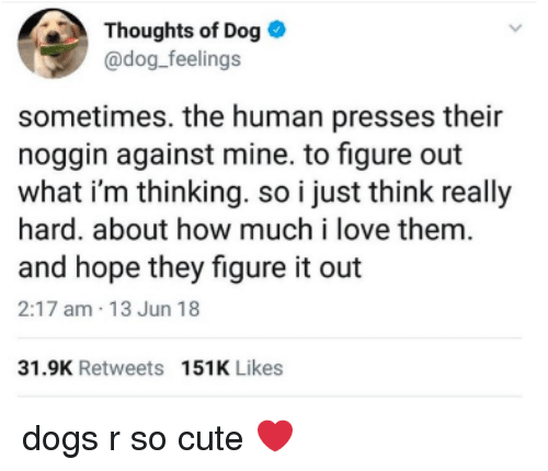 Cute, Dogs, and Love: Thoughts of Dog  @dog_feelings  sometimes. the human presses their  noggin against mine. to figure out  what i'm thinking. so i just think really  hard. about how much i love them  and hope they figure it out  2:17 am 13 Jun 18  31.9K Retweets 151K Likes dogs r so cute ❤️