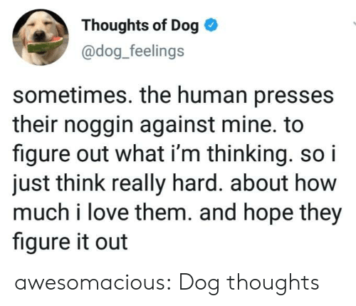 Love, Tumblr, and Blog: Thoughts of Dog  @dog_feelings  sometimes. the human presses  their noggin against mine. to  figure out what i'm thinking. so i  just think really hard. about how  much i love them. and hope they  figure it out awesomacious:  Dog thoughts