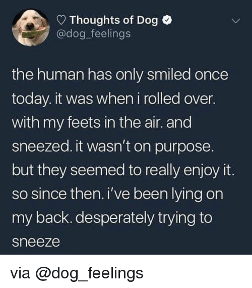 feets: Thoughts of Dog  @dog_feelings  the human has only smiled once  today. it was when i rolled over.  with my feets in the air. and  sneezed. it wasn't on purpose  but they seemed to really enjoy it  so since then. i've been lying on  my back. desperately trying to  sneeze via @dog_feelings