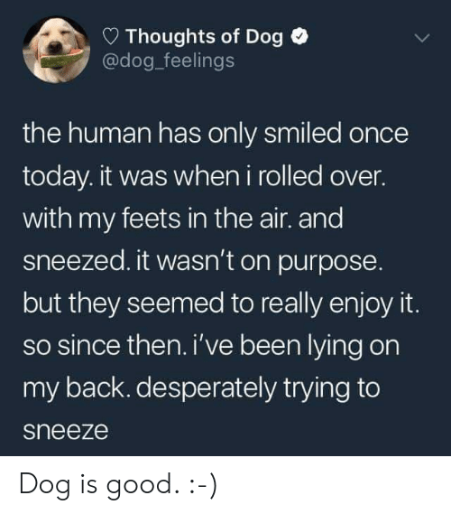 feets: Thoughts of Dog  @dog_feelings  the human has only smiled once  today. it was when i rolled over.  with my feets in the air. and  sneezed. it wasn't on purpose  but they seemed to really enjoy it.  so since then. i've been lying on  my back. desperately trying to  sneeze Dog is good. :-)