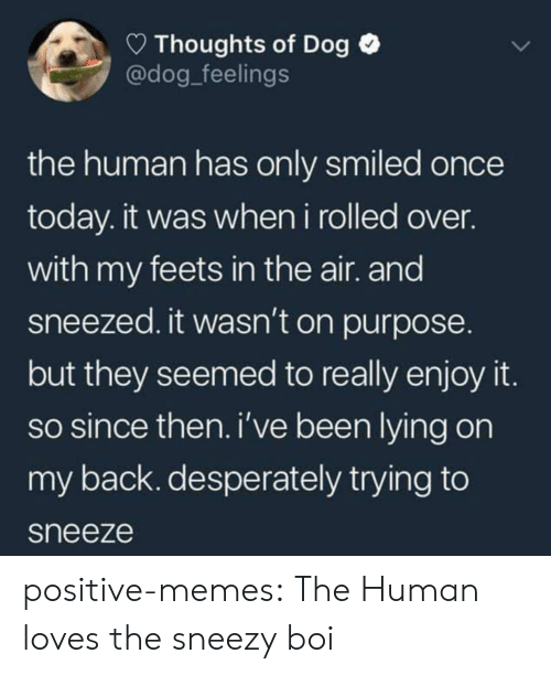 feets: Thoughts of Dog  @dog_feelings  the human has only smiled once  today. it was when i rolled over.  with my feets in the air. and  sneezed. it wasn't on purpose.  but they seemed to really enjoy it  so since then. i've been lying on  my back. desperately trying to  sneeze positive-memes:  The Human loves the sneezy boi