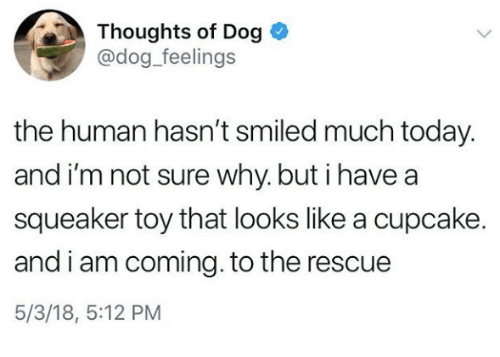 Today, Dog, and Human: Thoughts of Dog  @dog_feelings  the human hasn't smiled much today.  and i'm not sure why. but i havea  squeaker toy that looks like a cupcake.  and i am coming. to the rescue  5/3/18, 5:12 PM
