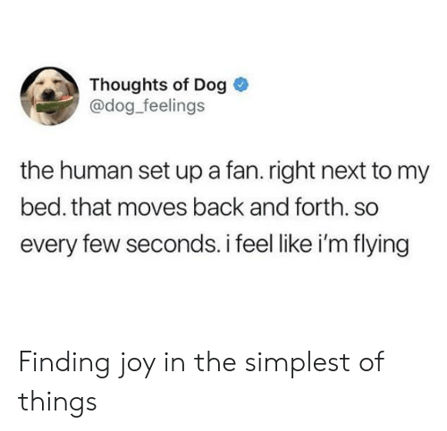 Back, Joy, and Dog: Thoughts of Dog  @dog_feelings  the human set up a fan. right next to my  bed. that moves back and forth. so  every few seconds. i feel like i'm flying Finding joy in the simplest of things
