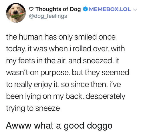 Good Doggo: Thoughts of Dog OMEMEBOX.LOL  @dog_feelings  the human has only smiled once  today. it was when irolled over. with  my feets in the air. and sneezed. it  wasn't on purpose. but they seemed  to really enjoy it. so since then. i've  been lying on my back. desperately  trying to sneeze Awww what a good doggo