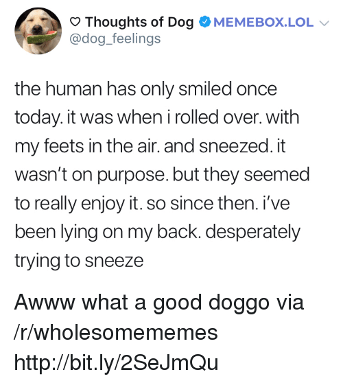 Good Doggo: Thoughts of Dog OMEMEBOX.LOL  @dog_feelings  the human has only smiled once  today. it was when irolled over. with  my feets in the air. and sneezed. it  wasn't on purpose. but they seemed  to really enjoy it. so since then. i've  been lying on my back. desperately  trying to sneeze Awww what a good doggo via /r/wholesomememes http://bit.ly/2SeJmQu