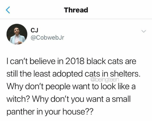 Cats, Black, and House: Thread  CJ  @CobwebJr  I can't believe in 2018 black cats are  still the least adopted cats in shelters.  Why don't people want to look like a  witch? Why don't you want a small  panther in your house??  @beingteen