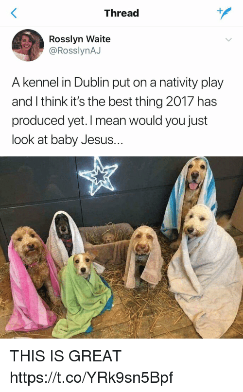 dublin: Thread  Rosslyn Waite  @RosslynAJ  A kennel in Dublin put on a nativity play  and I think it's the best thing 2017 has  produced yet. I mean would you just  look at baby Jesus.. THIS IS GREAT https://t.co/YRk9sn5Bpf